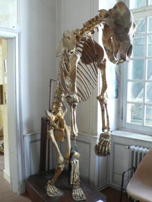 Museu de Luchon 2 [1024x768]