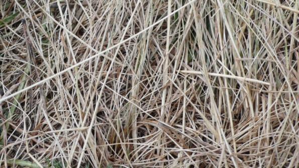 herba despres del desgel [1024x768]